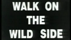 Walk on the wild side.png
